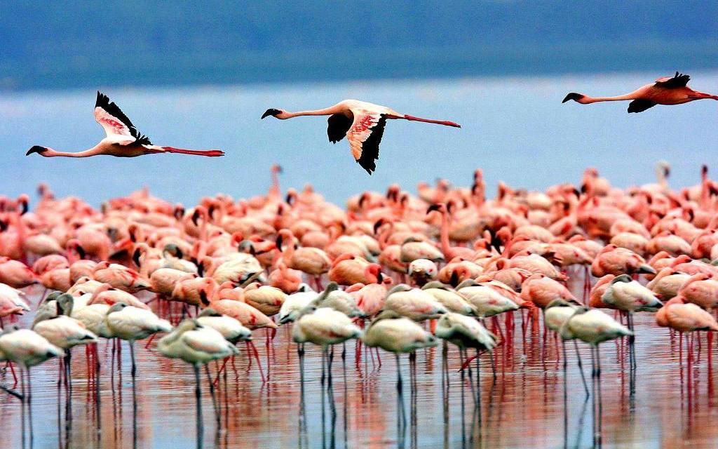 Northern Circuit Tanzania National Parks